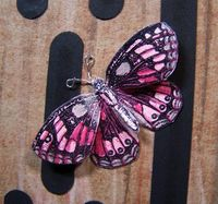 Butterfly pink close up